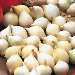 Onions White Snowball Sets Bulbs 50 Per Pack