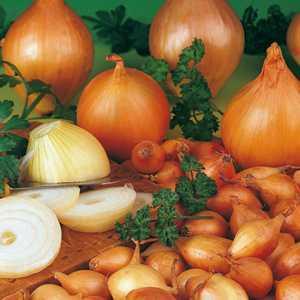 Onions Japanese Onion Sets Sen Shyu Yellow 50 Per Pack
