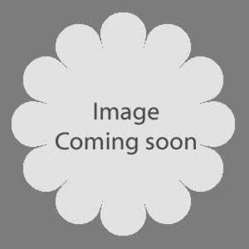 Azalea Japonica 'Conny'