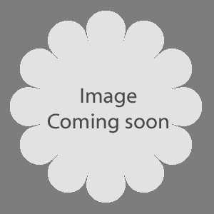 Cryptomeria Japonica Globosa Nana (Japanese Red Cedar) 1/2 Standard 15Ltr