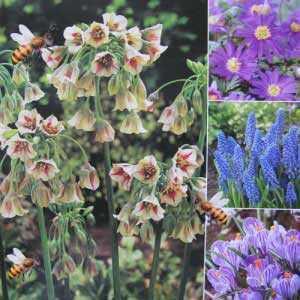 Nectaroscordum, Anemone, Muscari and Crocus Bulbs Happy Bee Collection 50 per pack