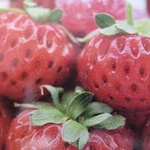 Strawberry Framberry 3 Per Pack