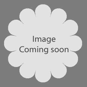 Azalea Knaphill 'White Throat'