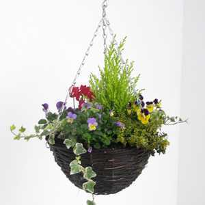 Winter Planted Hanging Baskets